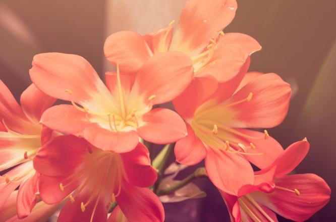 foto flores web eva